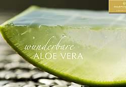 Geischtsmassage Aloe Vera Frischpflanzenblatt
